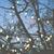 Aoife_9776